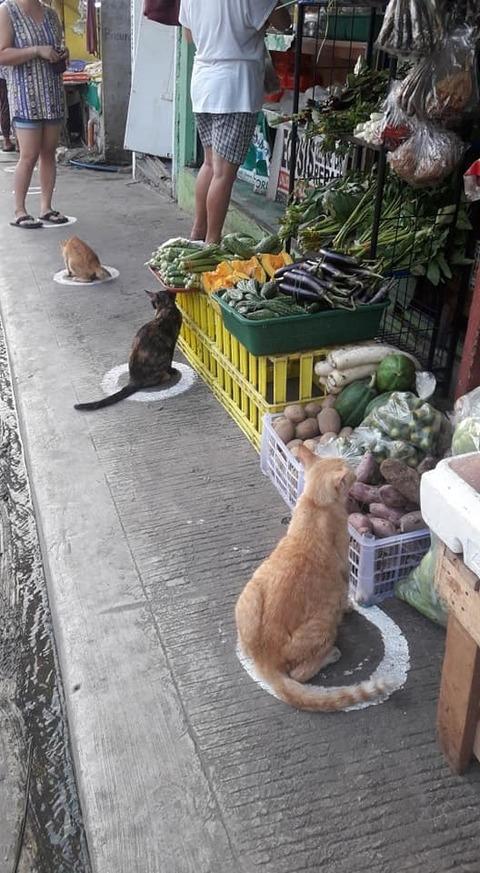 gatti-cerchi-distanziamento-sociale