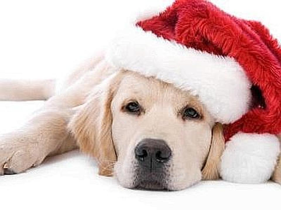 Immagini Cani Natale.Babbo Natale A Quattro Zampe E Festa Anche Per Fido E Felix