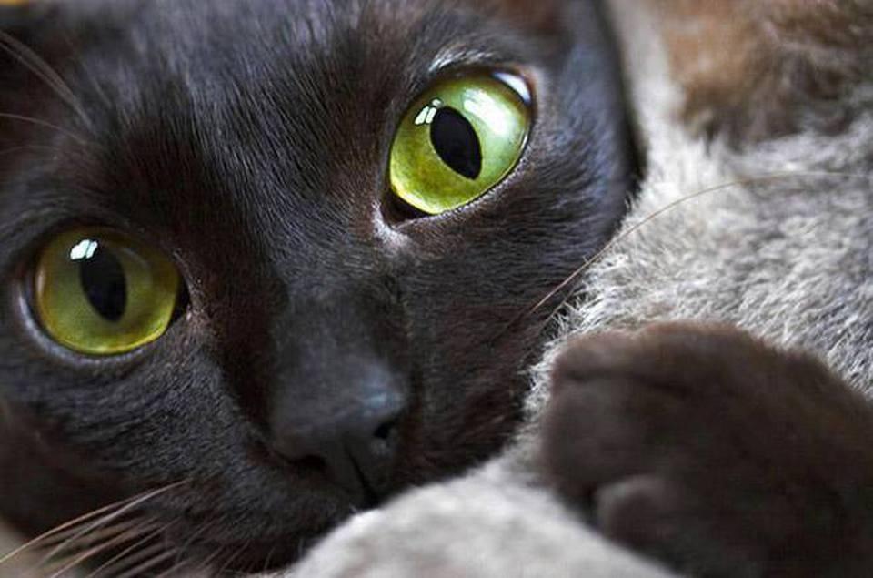 Lo Sapevi E Ora Scopri Le 9 Cose Che I Gatti Non Sopportano Il