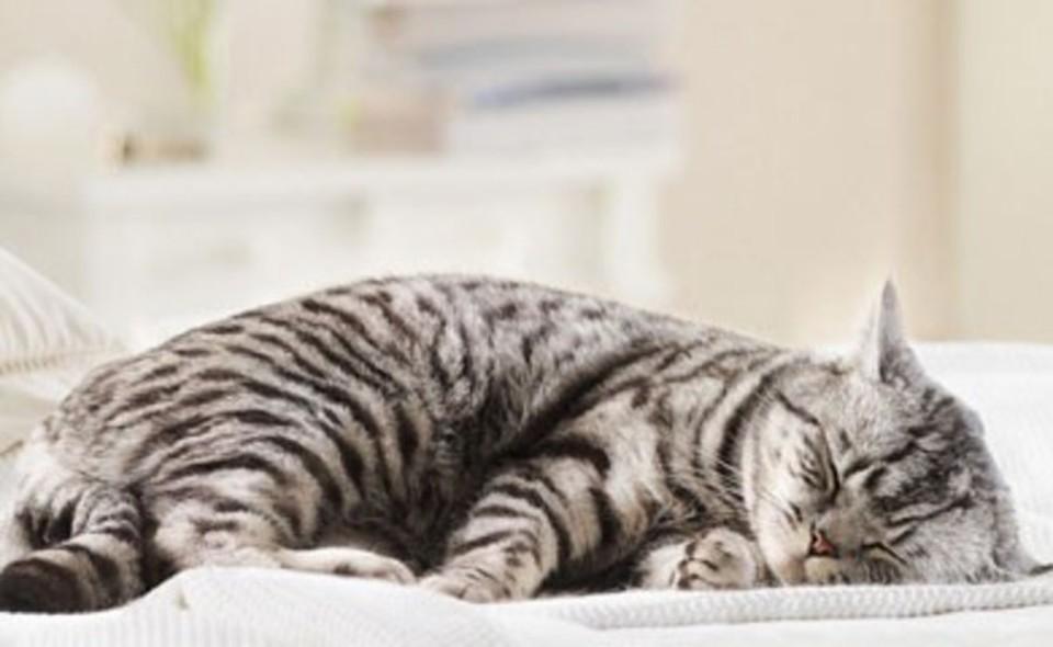 Risultati immagini per gatto muore dissanguato con una graffetta