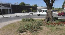 Napoli, manca la conduttura idrica: i giardini della metro di Scampia restano a secco