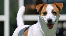 Uccide il cagnolino del figlio lanciandolo dal settimo piano, salvato dal linciaggio