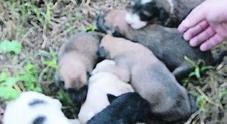 Caserta, cucciolata di randagi trovata avvelenata in strada