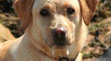 Bimbo curato con la saliva di un cane con la rabbia, omeopata nella bufera