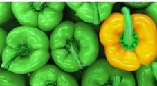 Piano di Sorrento, i prodotti di stagione in vetrina al Mercato della Terra Slow Food
