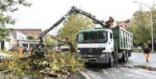Immagine Roma, alberi caduti: chiusi 4 km via Tiberina