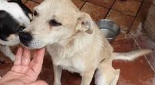 Domenica di paura a Bacoli: cane precipita in un dirupo, salvato