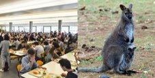 Immagine Carne di canguro a mensa, gli studenti si sentono male