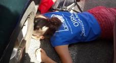 Caccia a Blu dentro l'auto: sei ore per salvare il micio