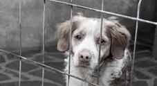 Campania, protocollo d'intesa per il contrasto del maltrattamento agli animali