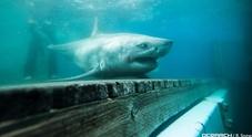 Squalo bianco di tre metri avvistato vicino alle spiagge dove fu girato il film di Spielberg