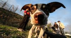 Non fa curare il cane malato: la Cassazione condanna il padrone a 10mila euro di multa