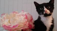 La padrona non si accorge del gatto e avvia la lavatrice, Felix sopravvive a 35 minuti di centrifuga