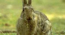 Il coniglio è anziano, coppia di Ischia lo uccide lanciandolo contro il muro