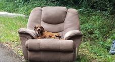 I padroni lo abbandonano insieme alla sua poltrona preferita, il cane non si muove per giorni convinto di vederli tornare
