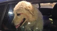 Vagava sul Raccordo, salvato dalla polizia stradale il cane Pelè