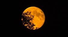 Arriva la Superluna: domani sera lo spettacolo nei cieli, ecco come vederla (anche in streaming)