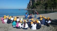 Ecco i Delfini guardiani, a Capri e Ischia progetto didattico per gli studenti