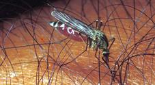 Le Zanzare mutanti sono arrivate in Italia: più aggressive delle Tigre