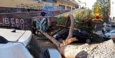 Immagine Roma, pino crolla su auto in sosta alla Garbatella