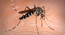 Zanzare, ecco perché pungono alle caviglie: lo spiega uno studio