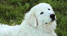 Cane muore poche ore dopo la padrona: Fofò si è lasciato andare per raggiungerla in cielo