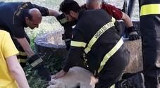 Cucciolo nel pozzo a Sala Consilina:  salvato da tre bambini e dai pompieri