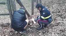 Agenti della polizia stradale salvano  un cucciolo abbandonato in strada