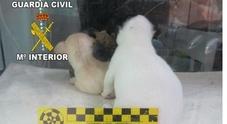 Orrore al negozio di animali, trovati 31 cuccioli di cane morti e altri 38 malati