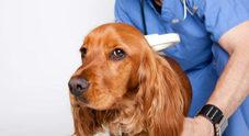 Microchip gratuito: registrazione gratis per tutti i cani ad Ercolano