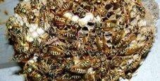 Immagine Punto da vespe al volante, va in choc e si schianta