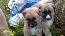 Cuccioli abbandonati in autostrada, l'appello dei volontari: «Serve cibo»