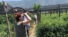 Elena Sofia Ricci visita i Giardini del Pomodoro Dop a Sarno