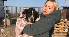 Cane «morto» e sepolto, due giorni dopo torna in superficie scavando con le zampette