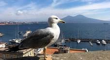 Avviato il monitoraggio degli uccelli marini sulle coste della Campania
