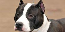 Immagine Aggrediti dal loro cane: donna ferita gravemente