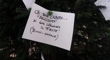 L'albero rubato torna in Galleria ma con un cartello «portasfortuna»
