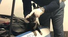 Gatto si intrufola nel motore di una volante della Polizia, gli agenti lo salvano e lo adottano come mascotte