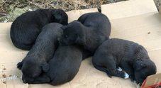 Cercano casa sette cuccioli abbandonati nei boschi di Quisisana