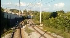 Circumvesuviana, capre sui binari: il pascolo sulla linea Napoli-Sorrento