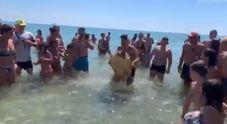 Tartaruga catturata e portata a riva per le foto: crudeltà sulla spiaggia | Video