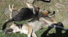 Due cani impiccati dai pastori per vendetta. La denuncia degli animalisti