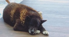 Un'aiuola per Nerone, cane simbolo di Bacoli: sul web migliaia messaggi