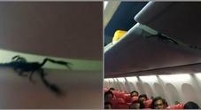 Scorpione gigante cammina sulla testa dei passeggeri: panico sull'aereo
