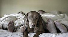 Micio e Fido sono «invecchiati»: uno su due dorme nel lettone con i padroni