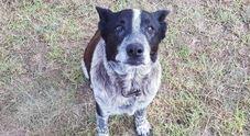 Bimba di tre anni si perde nel bosco, il cane la veglia tutta la notte e guida i soccorsi