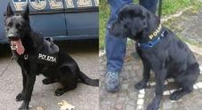 Nora e Dorian, cani antidroga inchiodano quattro spacciatori