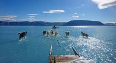 Cani da slitta sull'acqua: la foto simbolo dello scioglimento dei ghiacciai