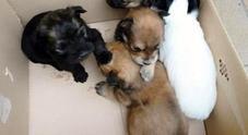 Barcellona, trovati 31 cani senza vita nel congelatore di un negozio