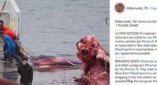 Elisabetta Canalis contro la strage di balene: «In Islanda ne hanno uccisa una incinta»